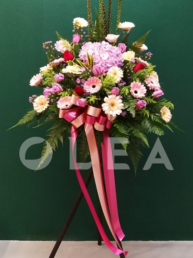 Opening Flowers KL